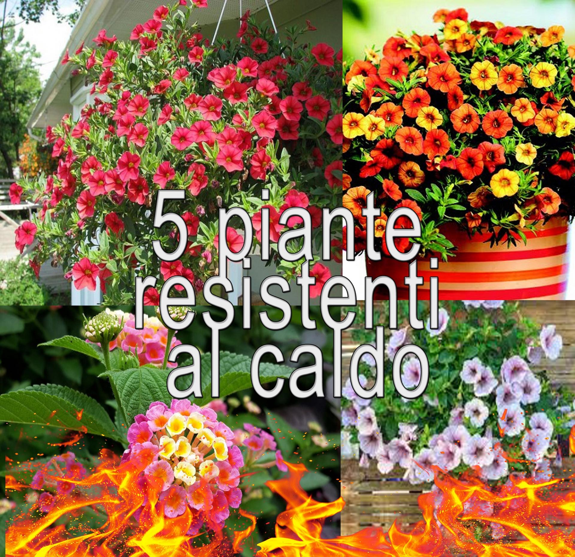 Piante Che Fioriscono Tutta Estate 5 piante resistenti al caldo | garden vivai morselli modena